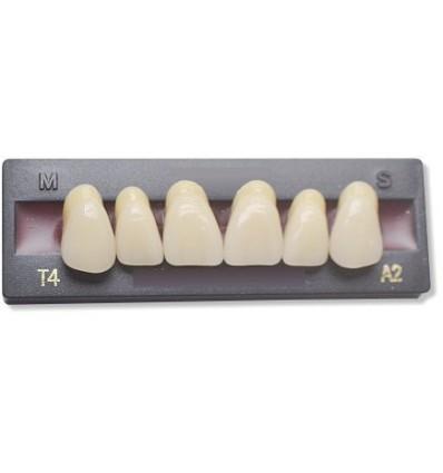 Dents artificielles pour dentier et appareil amovible